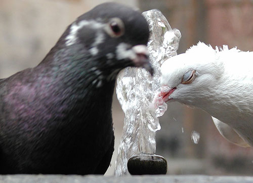 Приметы и суеверия про птиц